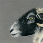 Mandy Allan - Swaledale Ewe at Sow How Farm