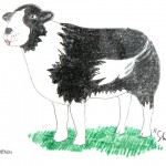 David Penn Sheepdog