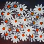 daisies black