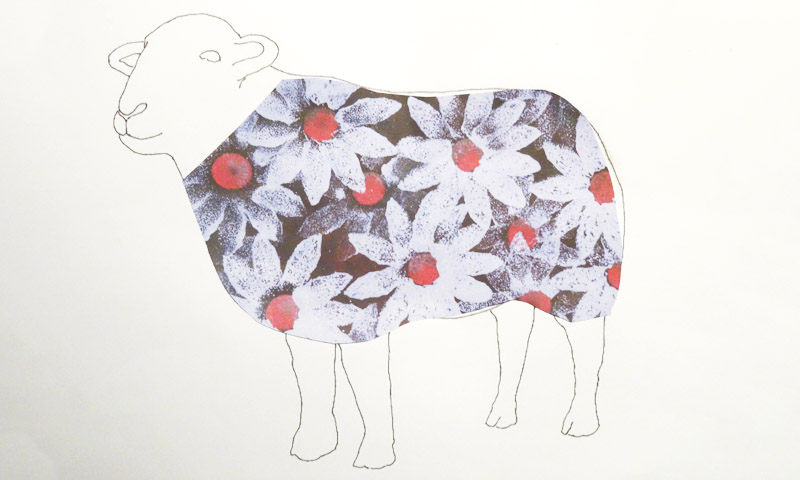 daisy sheep