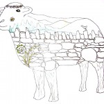 sheep image 2